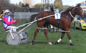 The Manipulator after his Winton win. Pic courtesy of southlandharnessracing.co.nz