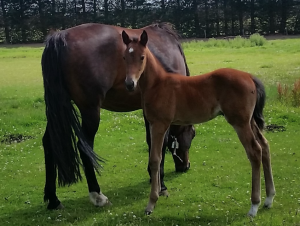 NZ Cup winner Arden Rooney's little half-brother, by Panspacificflight, at one-month old