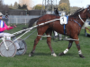 The Manipulator . . . the first Panspacificflight New Zealand winner. Pic courtesy of southlandharnessracing.co.nz