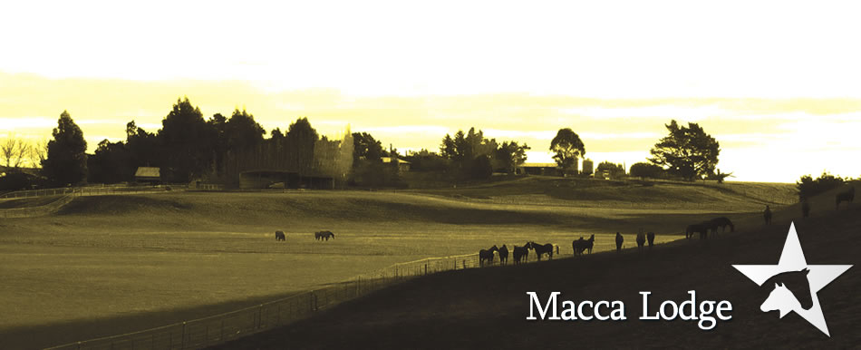 Macca Lodge Stud Farm